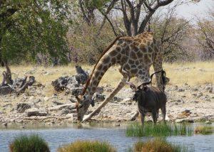 luna de miere - iunie - africa, safari - overseas travel